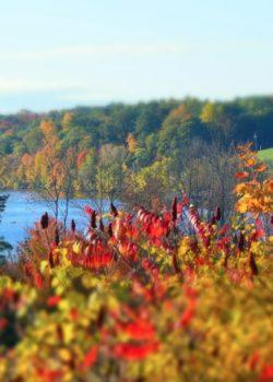 Foliage by Kristen Hislop